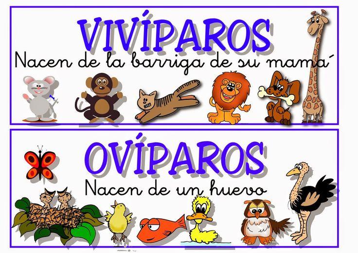 Vocabulario en imágenes. Maestra de Infantil y Primaria.: Carteles con la clasificación de animales: Primer ciclo de Primaria.
