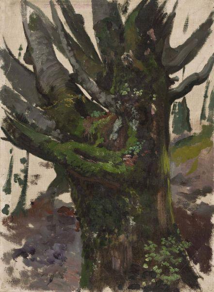 Studium drzewa - Leon Wyczółkowski