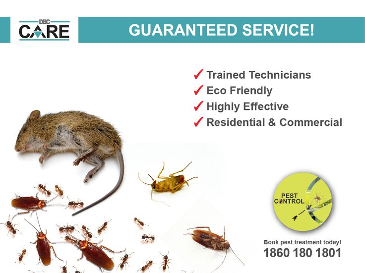 DBC HOME CARE provides you pest control services at your doorstep. Contact us: 18601801801 | http://www.dbc.care/in/services/pest-control/  ‪