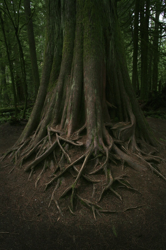 Roots / Vancouver Island, Canada. By Jonathan Clark