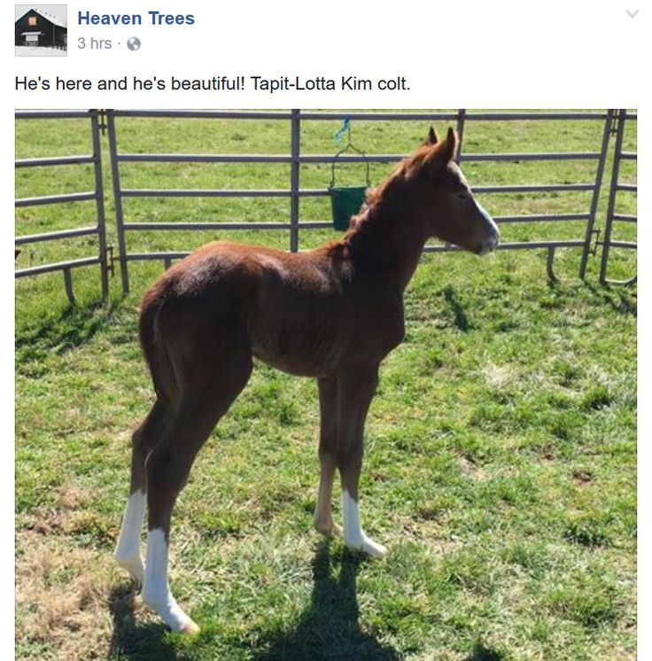 1000 Ideas About Thoroughbred On Pinterest Horses