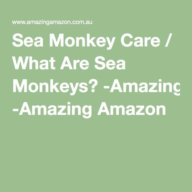 Sea Monkey Care / What Are Sea Monkeys? -Amazing Amazon
