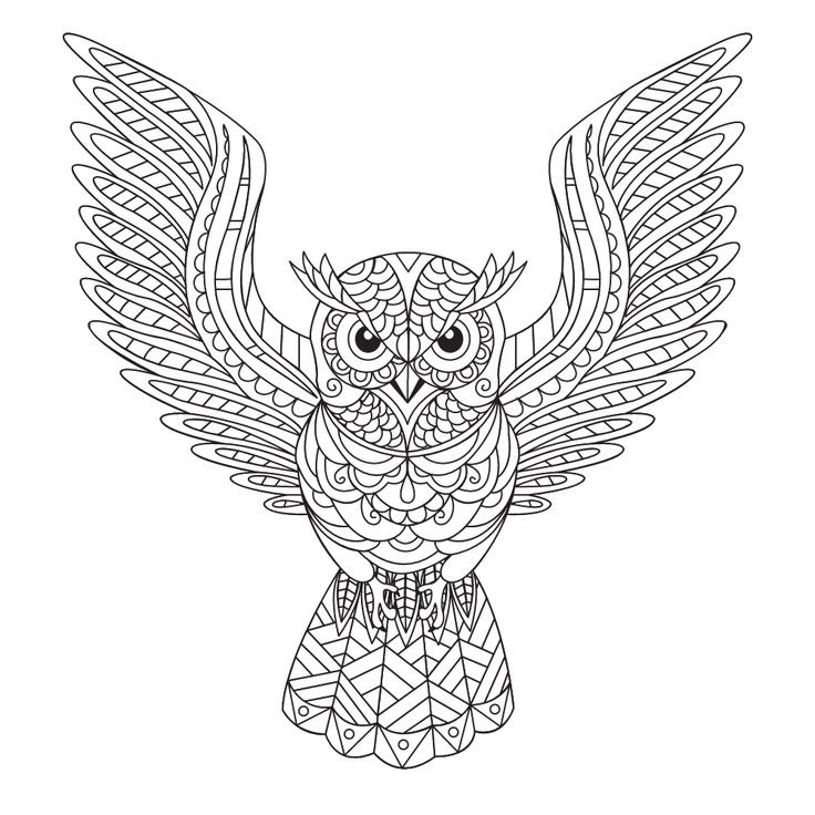 404 Best Images About Coloring Owl On Pinterest