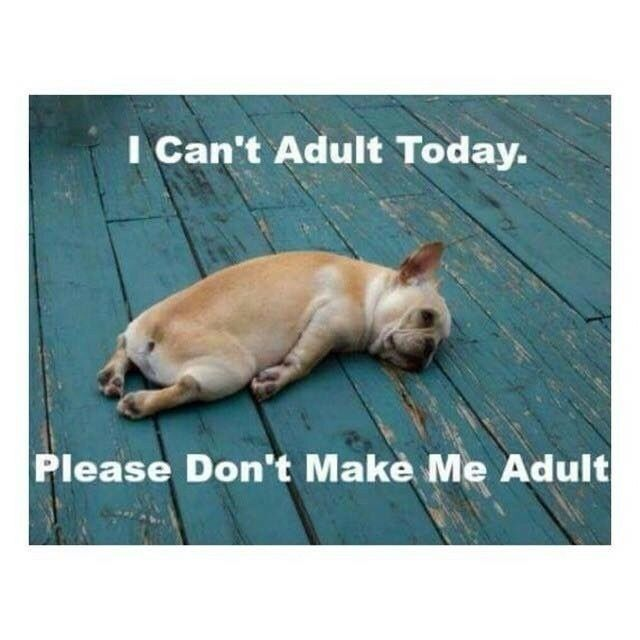 I can't adult today meme Imgur Tumblr Please don't make me adult!