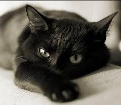Resultado de imagen de fotos de gatos bonitos