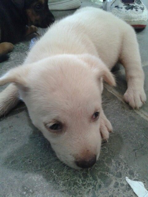 This puppy were left by his parent , my friend adopt this puppy..... Hey friend , make sure u take care his with good. Or not i will kill u