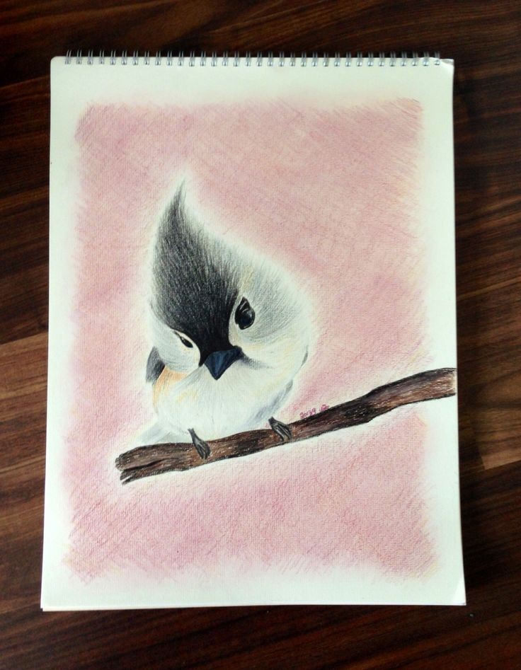 Cute bird , colour pencils