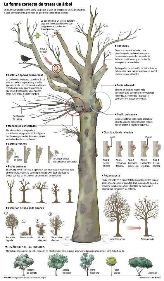 La forma correcta de tratar un árbol. Interesante infografía.