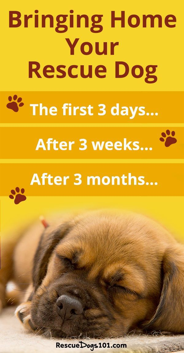 Bringing Your New Dog Or Puppy Home And The 3 3 3 Rule Dog Care