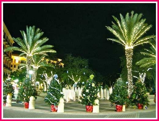 christmas lights on palm trees - Palm Tree Christmas Lights