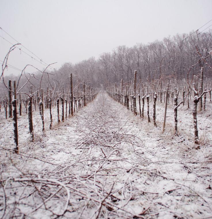 winter, Csiten dűlő