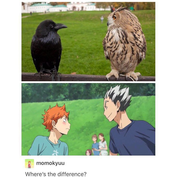 WAT there's a difference between these pics !!?? #haikyuu