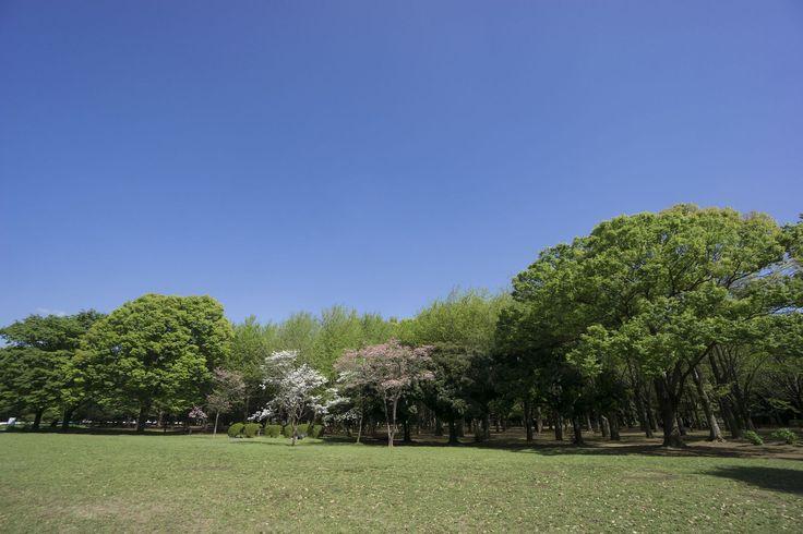 原宿は、国内外問わず観光客が多く訪れる観光スポットです。東京観光にやってきた人や外国人観光客を案内するのにぴったりなスポットをご紹介します!日本最大の鳥居から「kawaii文化」まで原宿の魅力がたっぷり!