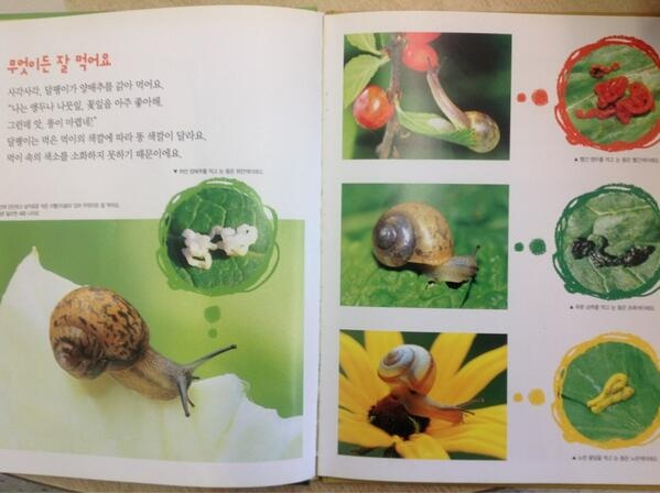 only my favourite fact about snails EVER! shared by Nancy Niessen (World_of_K) on Twitter
