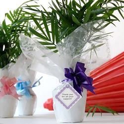 Mini Palm Tree Favors: Real Mini Palm Trees Baby Shower Favors  I am doing a Beach theme for my daughter's baby shower and to go along with the theme, I am giving live mini palm
