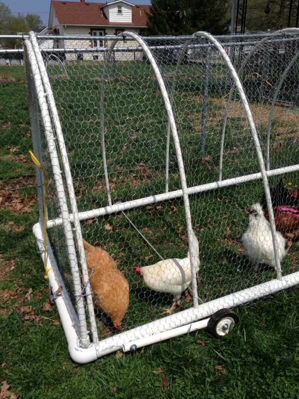 25 best ideas about chicken tractors on pinterest for Diy portable chicken coop
