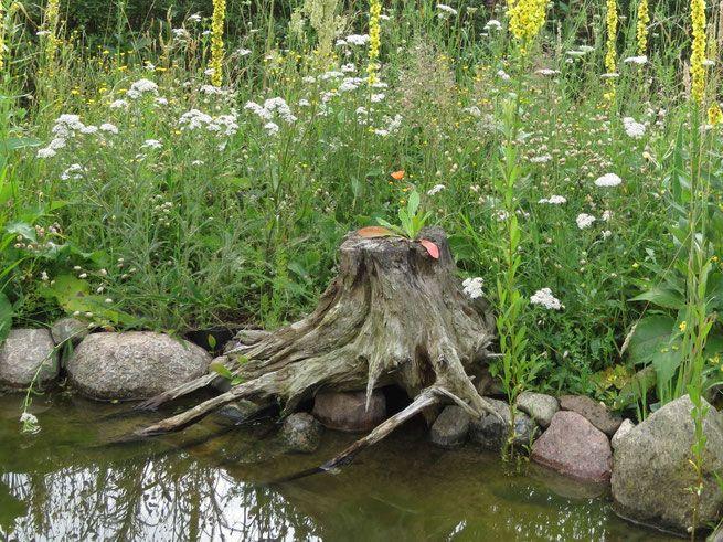 Totholz Wurzel Am Naturteich In 2020 Garten Naturgarten Naturteich