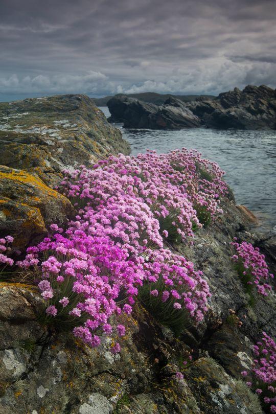 Shetland Isles, Scotland.  For other cool travel stuff check out www.danteharker.com