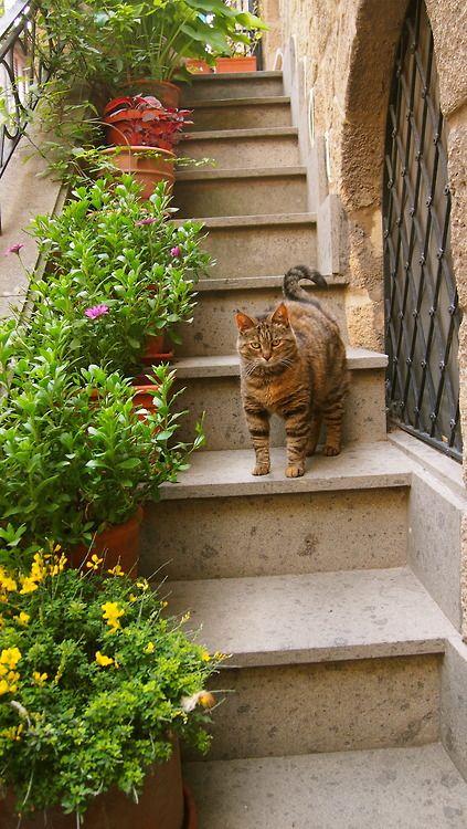 Kitty in Tarquinia, Italy #cat