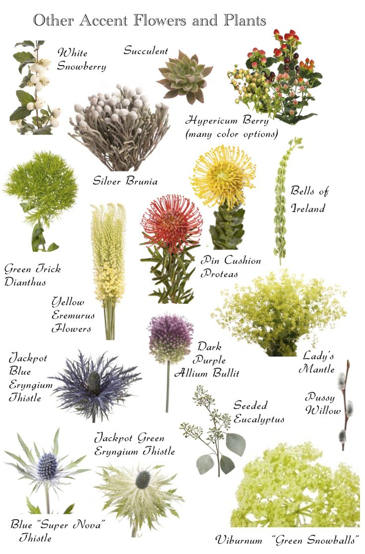 types of flowers with names and meanings. flower names what do they mean verdissimo types of flowers with and meanings