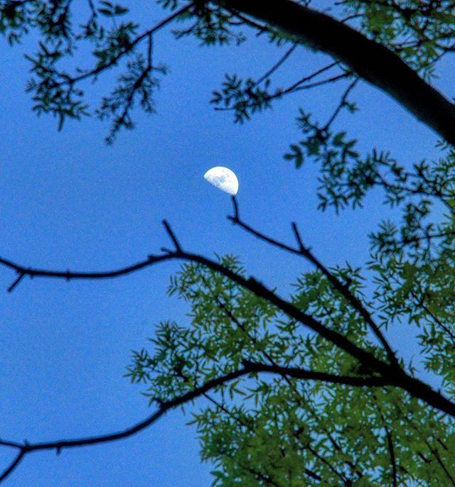 . . . #shadow #sky #darkblue #darkness #branch #iran #shiraz #halfmoon #moon #nature #scenery #tree #artphoto #photography #photo #night #forest #moon #photo #photography #artphoto #scenery #blue #half #clearmoon  #clear #nice #me #instagram