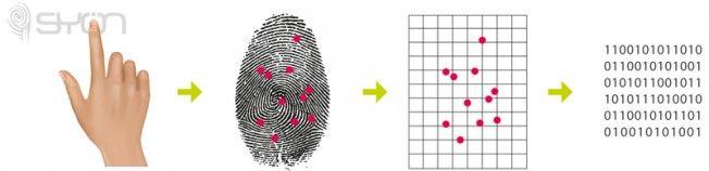 Patron de lectura de huella dactilar en sistemas de control de accesos y sistemas de control horario para trabajadores.  #fingerprint