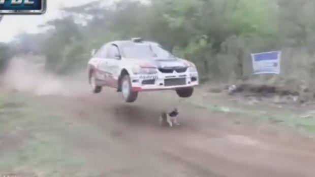 Το πιο τυχερό σκυλί του κόσμου! [video] - Φωτογραφία 1