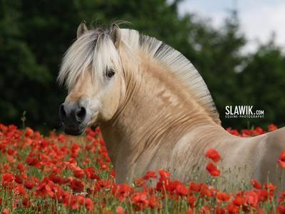 Un cheval dans les fleur.