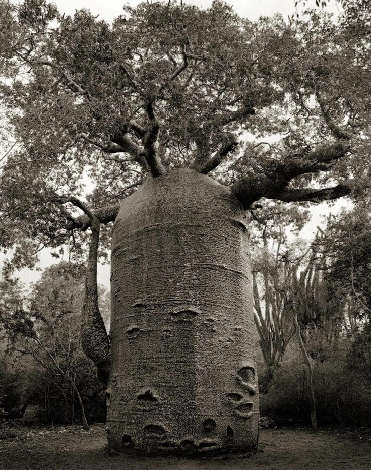 """THE IFATY TEAPOT"" // Beth Moon, a photographer based in San Francisco,"