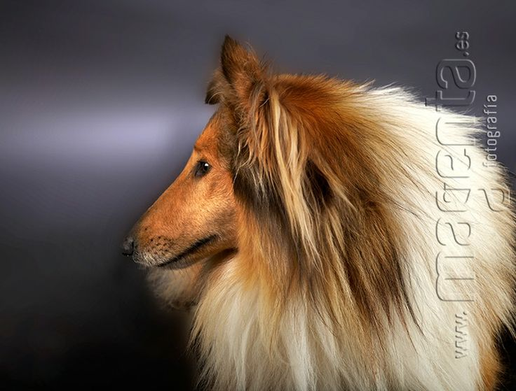 Tu mejor amigo. Fotografo de estudio mallorca, fotografia de mascotas, fotograf mallorca, el photo book de su mascota