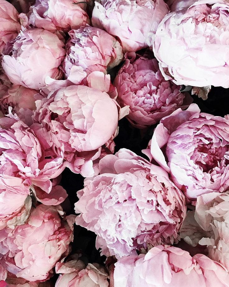 Inspirational Quotes On Pinterest: Best 25+ Peonies Ideas Only On Pinterest