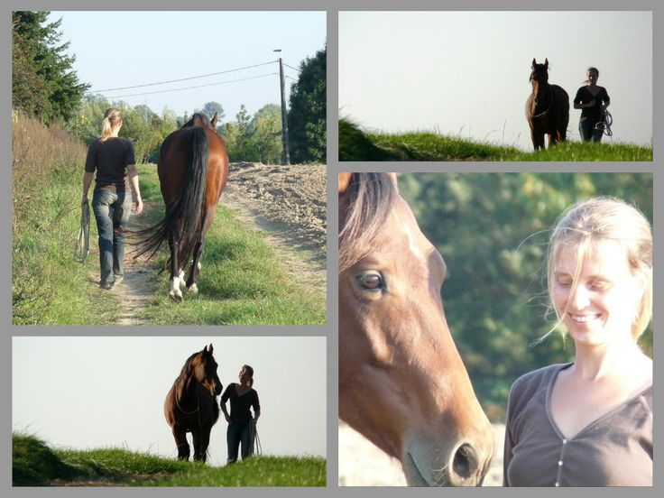 Liberty Training with its 8 connection exercises is the foundation of Horsefulness Training. The goal of Liberty Training is to develop a true connection between human and horse based on how horses interact and communicate within the herd. During Liberty Training you work with a horse that is set loose in a big riding arena …