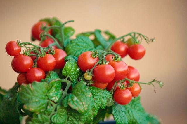 Мини-огород в квартире: как вырастить овощи у себя дома 0