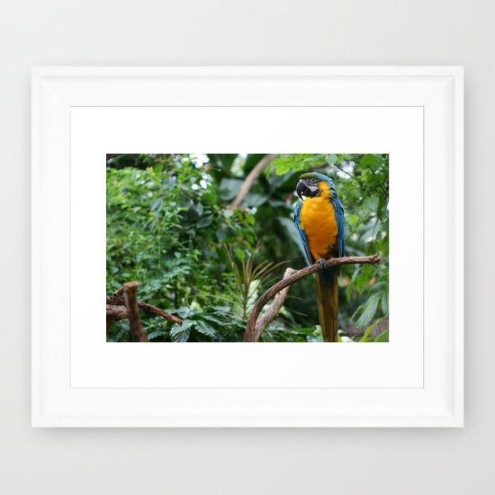 Macaw - Framed Print, Society 6