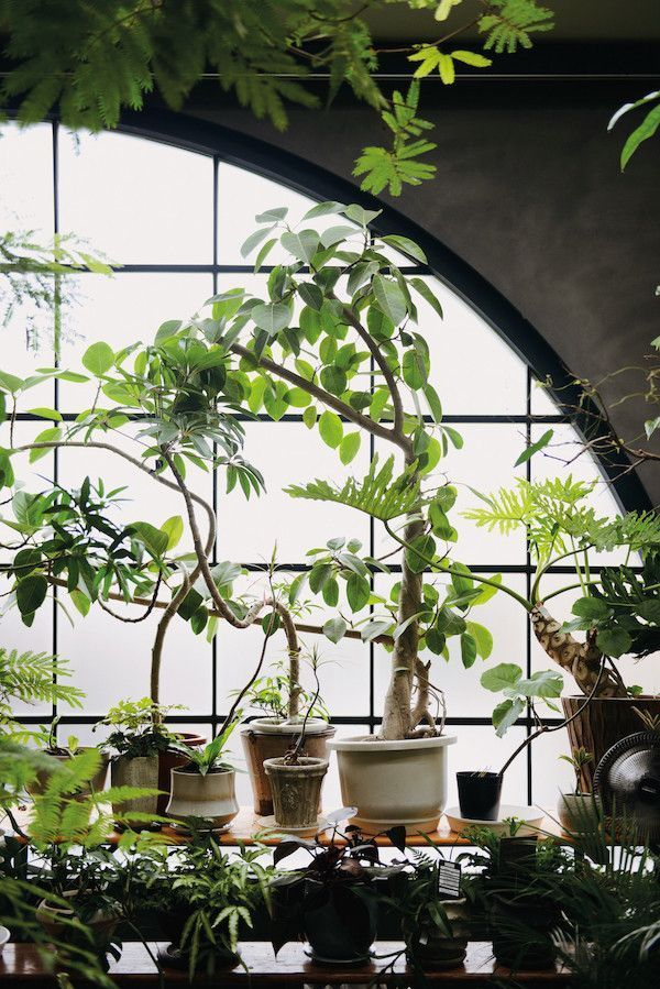 Indoor Green : Living with Plants | Mr Kitly