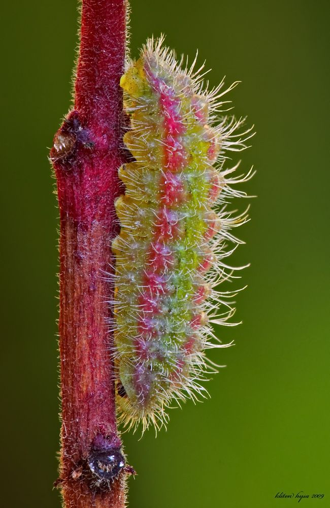 All sizes | caterpillar | Flickr - Photo Sharing!
