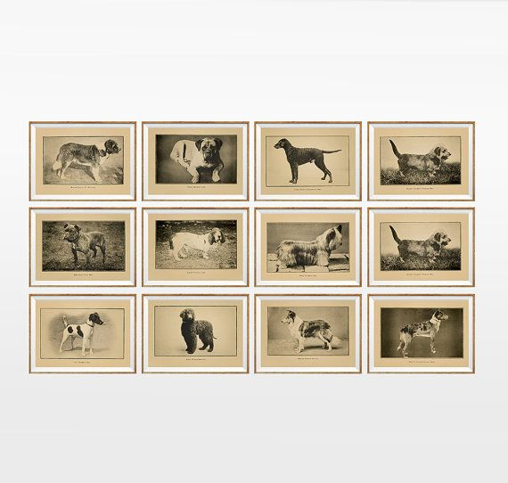 Dog Breeds Chart Art Print SET OF 12. A4 Size by AntiqueWallDecor