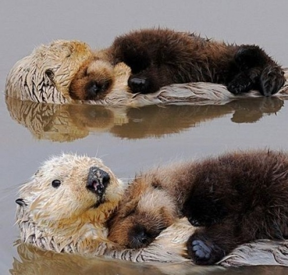 Baby Otter Waterbed