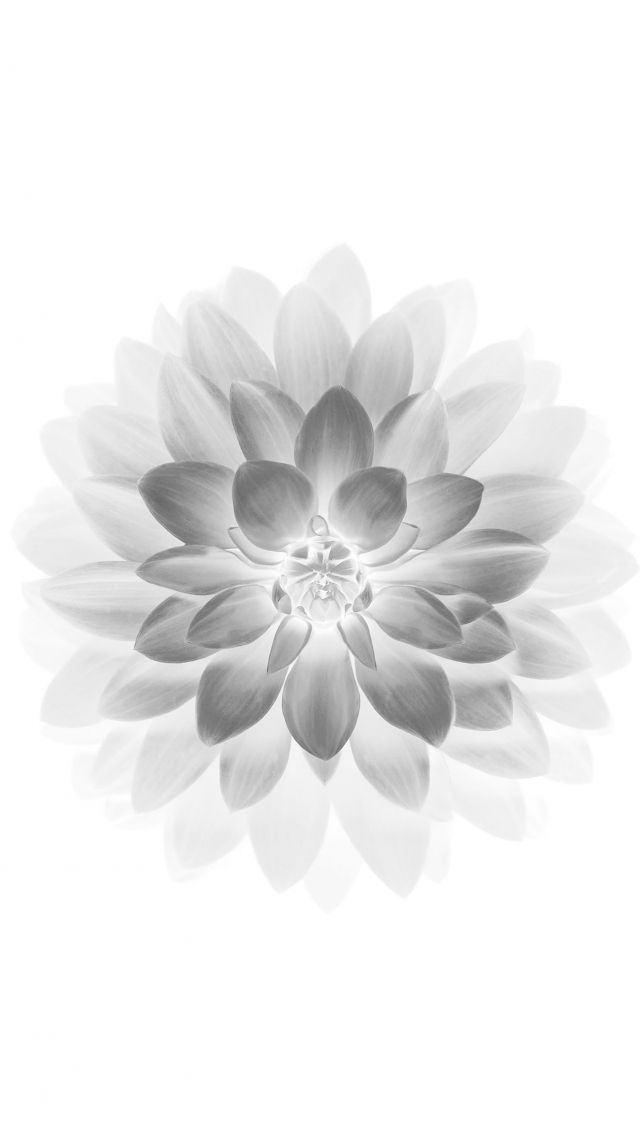 Download Free Hd Wallpaper From Above Link White Grey Lotus Flower Pla In 2020 Beautiful Wallpapers For Iphone White Wallpaper For Iphone Background Hd Wallpaper