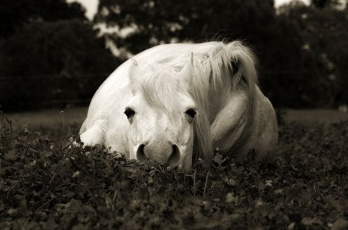 : Lazy Day, Beautiful, Cute Out, Sleepy Ponies, Naps Time, Photo, Equestrian, Sweet Dreams, Animal