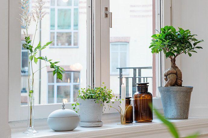 inspiration växter i fönster - Sök på Google
