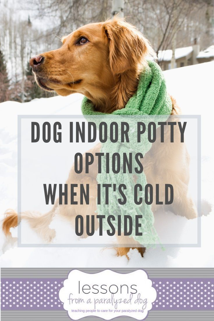 Dog Indoor Potty Options For The Cold Winter Months Indoor Dog