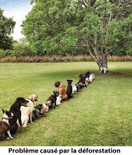 Trop  de chiens!