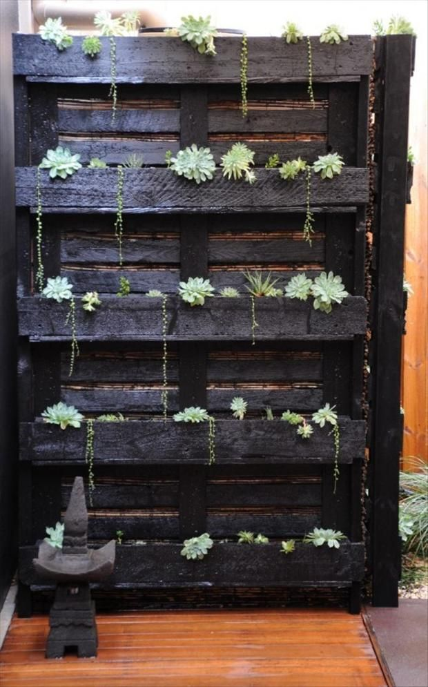 Painted pallet repurposed for vertical succulent garden