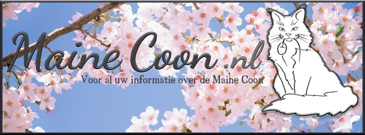 #banner #mainecoon.nl made by #Monique Beekmans