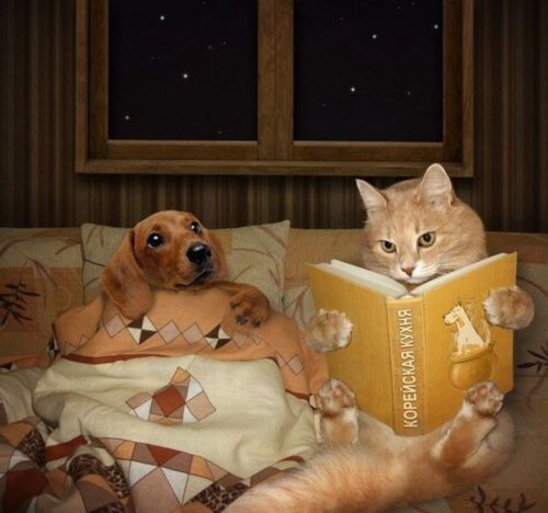 Okay, I'll read you just one more story, but you really need to learn to read for yourself.