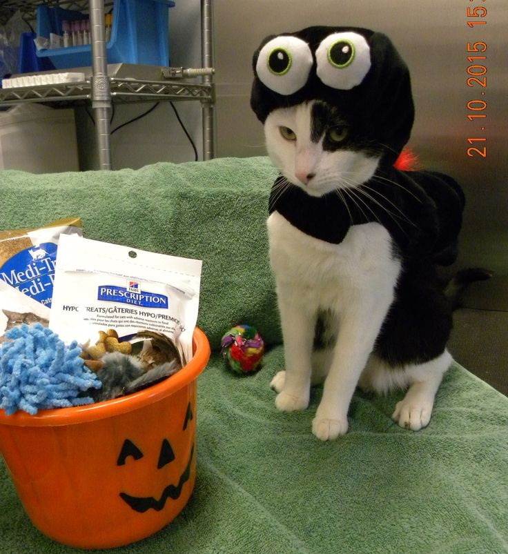 """Trick or treating, """"Alright who put the healthy stuff in my bucket?"""""""