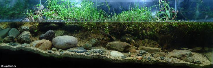 Rio San Lucas, sub-bacino del fiume Atoyac a San Lorenzo Cacaotepec, Oaxaca, Messico © Víctor Manuel Ortiz Cruz (Biotope Aquarium Design Contest 2015)