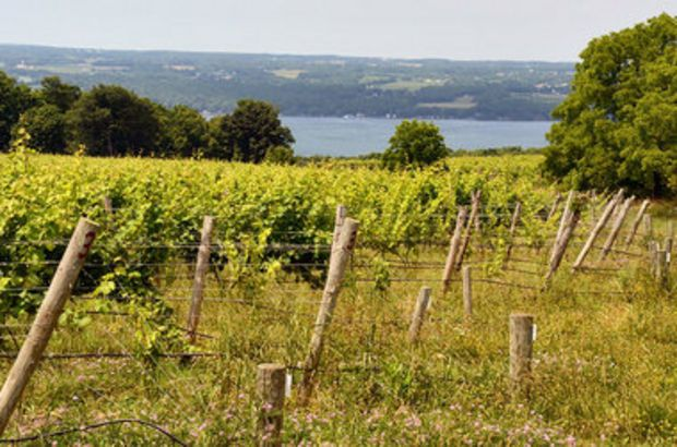 On a wine tour? 5 best Finger Lakes wineries to visit on Seneca Lake | NewYorkUpstate.com