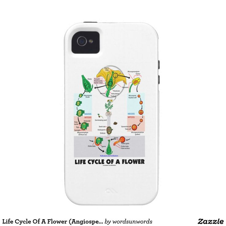 "Life Cycle Of A Flower (Angiosperm) Case-Mate iPhone 4 Cover #lifecycle #flower #angiosperm #angiosperm #geek #biologist #wordsandunwords #sepal #botany #biology #alternationofgenerations Make others do a double-take with this iPhone case featuring ""Life Cycle Of A Flower"" and show you botanical side!"